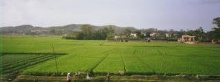 Der Reisgott