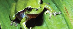 Der Regengeist und der Frosch